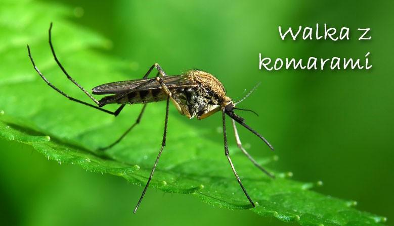 Walka z komarami