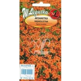 Legutko Aksamitka wąskolistna Orange Gem 0,3g