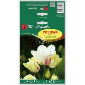 Tulipan wielokwiatowy Candy Club 4szt