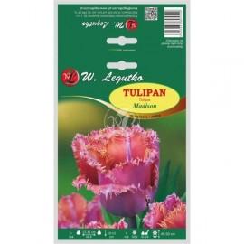 Tulipan strzępiasty pełny Madison 4szt