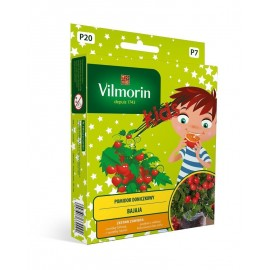 VIL KIDS MiniOgródek Pomidor doniczkowy Bajaja