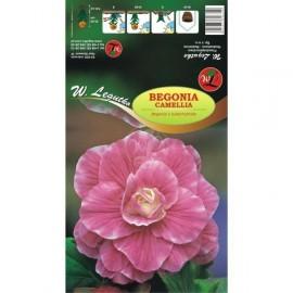 Begonia bulwiasta Camellia róż 1szt