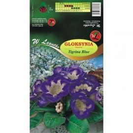 Gloksynia Tigrina Blue fioletowa 1szt