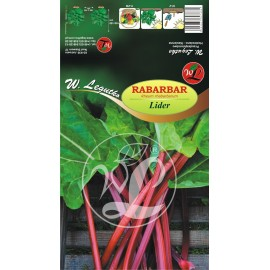 Rabarbar 'Lider' 1szt