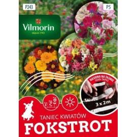 VIL Taniec Kwiatów Fokstrot nasiona na taśmie 3x2m