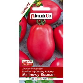 PLC Pomidor karłowy Malinowy Bosman 0,5g