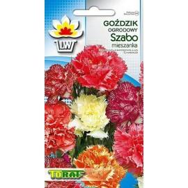 TORAF Goździk ogrodowy Szabo mix 0,5g