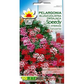 TORAF Pelargonia bluszczolitsna mix Speedy F2 10nasion