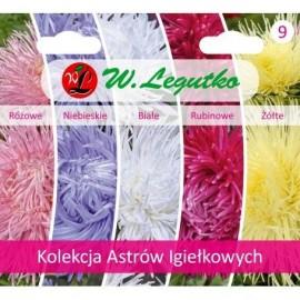 LG Kolekcja nasion Astrów Igiełkowych 5x0,3g