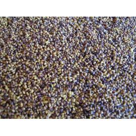 Koniczyna łąkowa Rozeta 1kg C/1