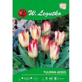 Tulipan Greiga Addis 1szt