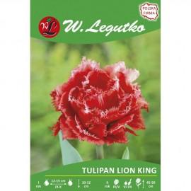 Tulipan Lion King 1szt