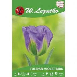 Tulipan Violet Bird 1szt