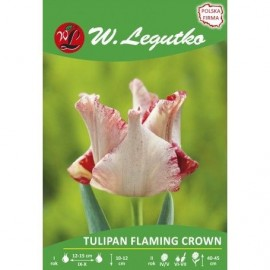 Tulipan Flaming Crown 1szt