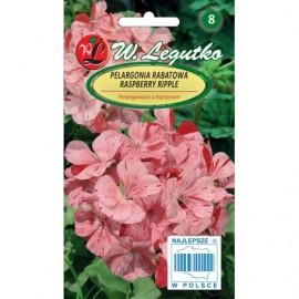 LG Pelargonia rabatowa Raspberry Ripple 0,04g