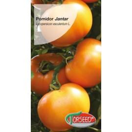 TOR Pomidor wielkoowocowy wczesny Jantar 0,2g