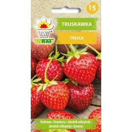 TORAF Truskawka Tresca 25szt