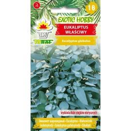 TORAF Eukaliptus właściwy 10szt