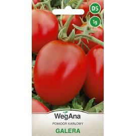 WEG Pomidor karłowy Galera 1g