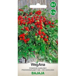WEG Pomidor doniczkowy Bajaja 0.3g