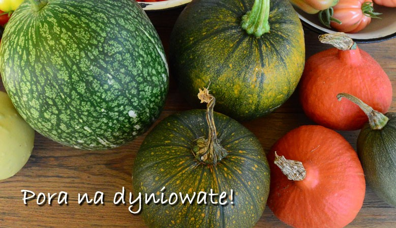 Dyniowate