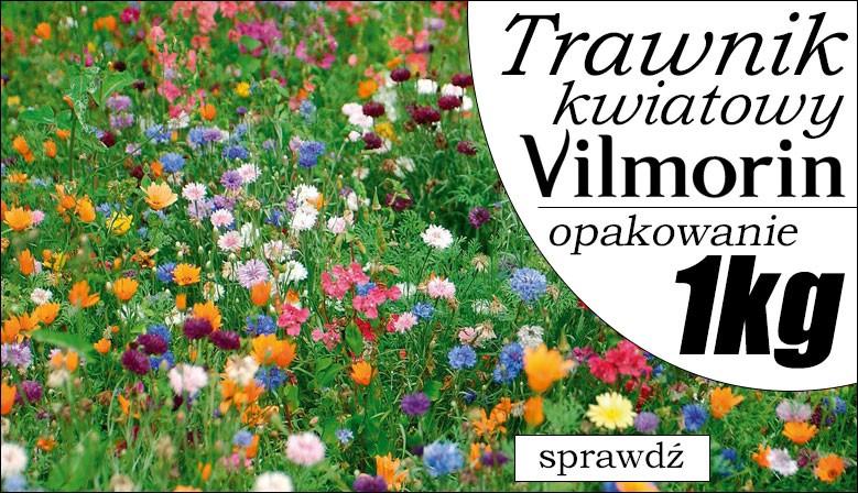 Trawnik kwiatowy Vilmorin